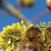 Natural Beekeeping Course