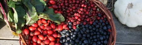 Eat the hedgerow – Autumn sessions
